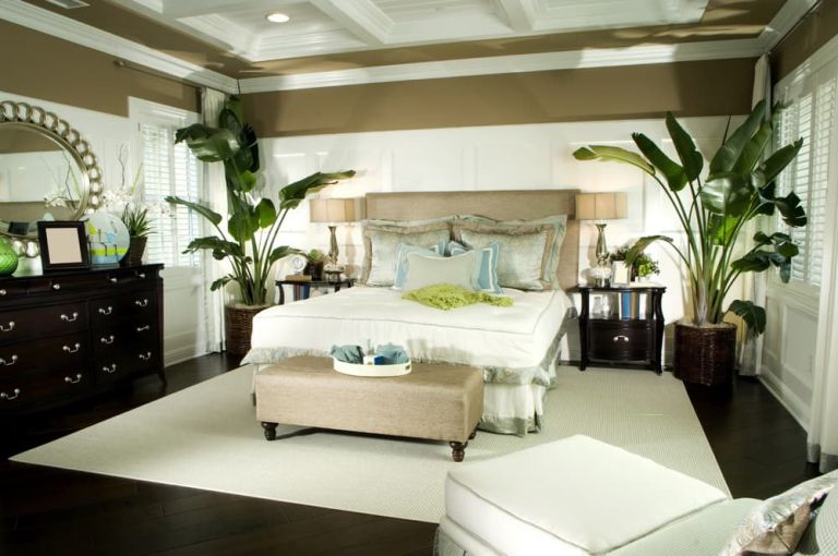 why feng shui doesn't like plants in bedroom  backed