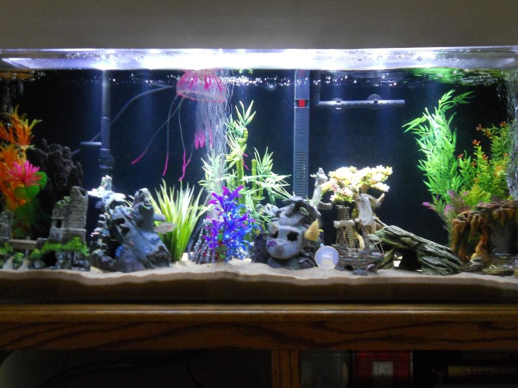 Fish tank in kitchen - Rectangular Aquariums Are Quite Common And Is A Suitable Shape For Your Aquarium