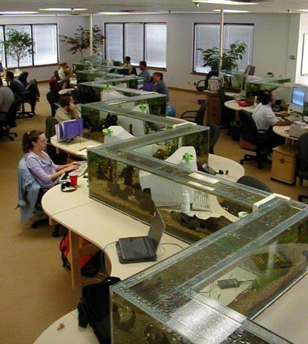Having an aquarium is helpful in high-stress environments.