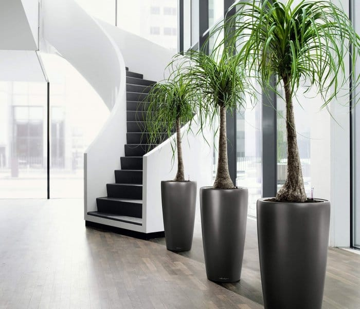 A Simple Guide to Feng Shui Indoor Plants - Feng Shui Nexus