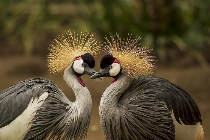 Feng Shui Placement Of Love Birds Feng Shui Nexus