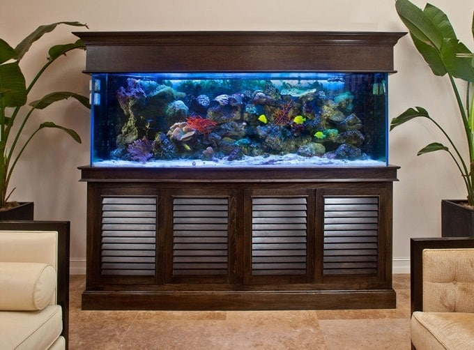 Tropical Living Room Fish Aquarium Feng Shui Min Feng Shui Nexus
