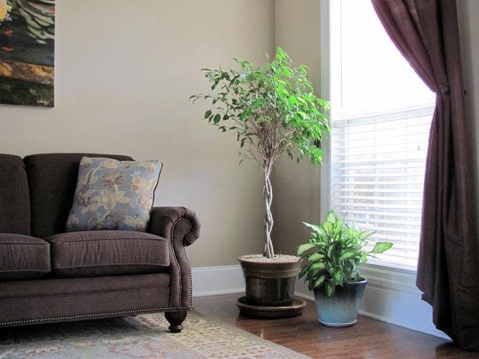 Living Room Is Suitable For Large Potted Plants With Large Round Leaves.